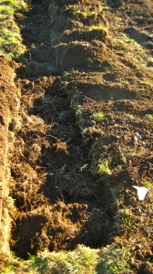 The sod goes back in the deep bed upside down on top of the soiled straw