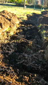 Top Quality locally sourced Organic fish compost is layered in next.