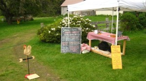 During harvest we have this store front set up to make shopping fun and easy.