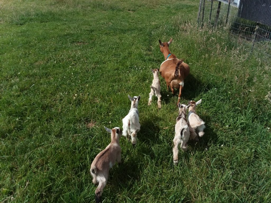 Goat Yoga Mom & Kidds