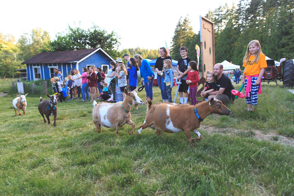 puget sound goat yoga
