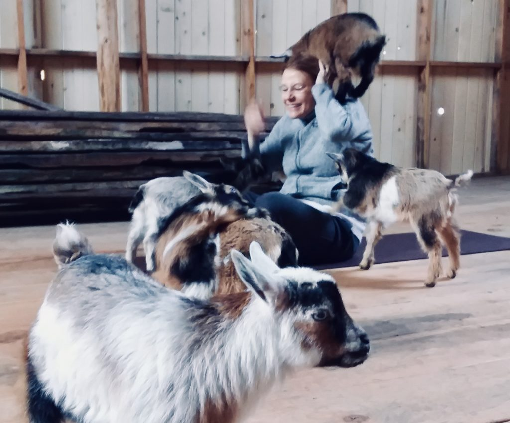 Seattle Area Goat Yoga