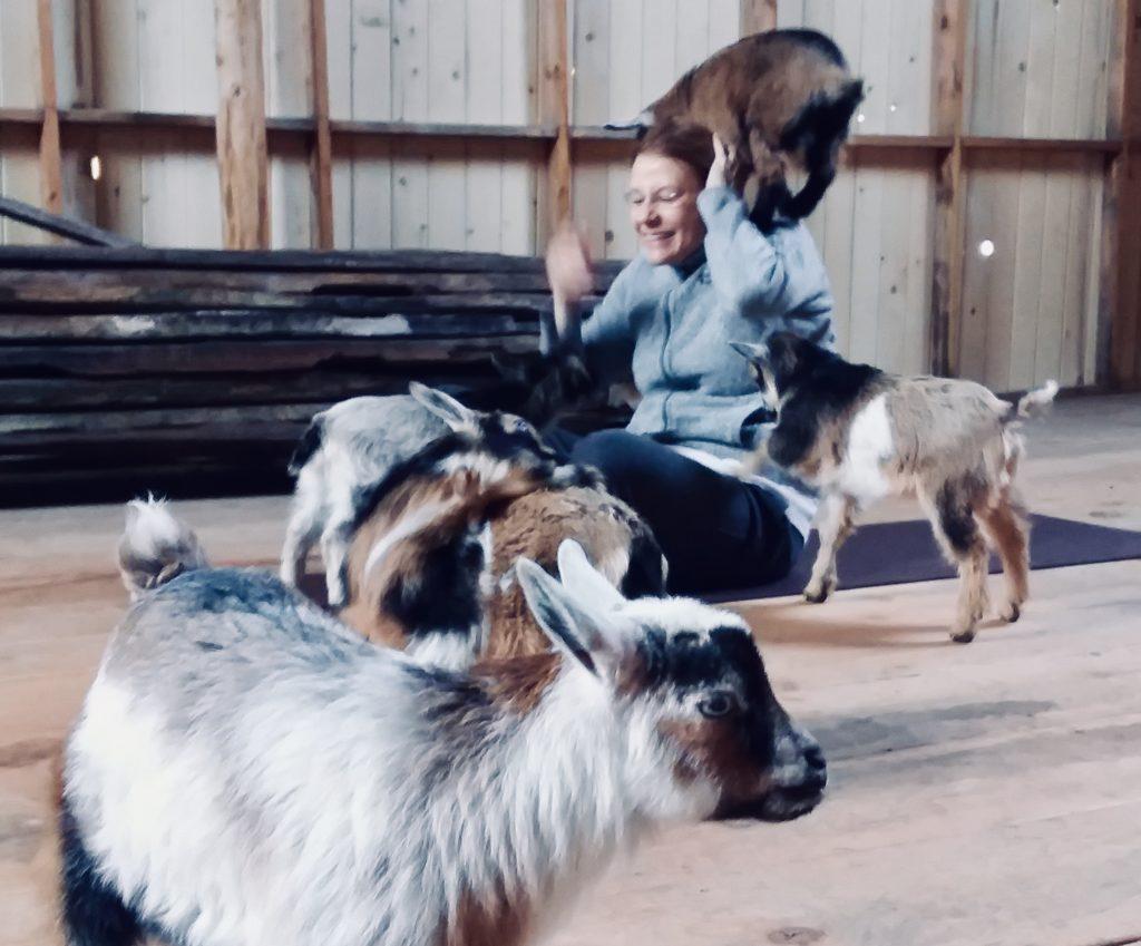 Seattle Area Goat Yoga