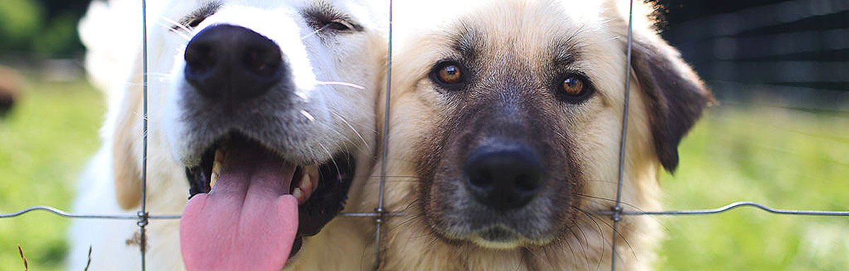 We have no shortage of new pals to meet anyone's cuddle needs